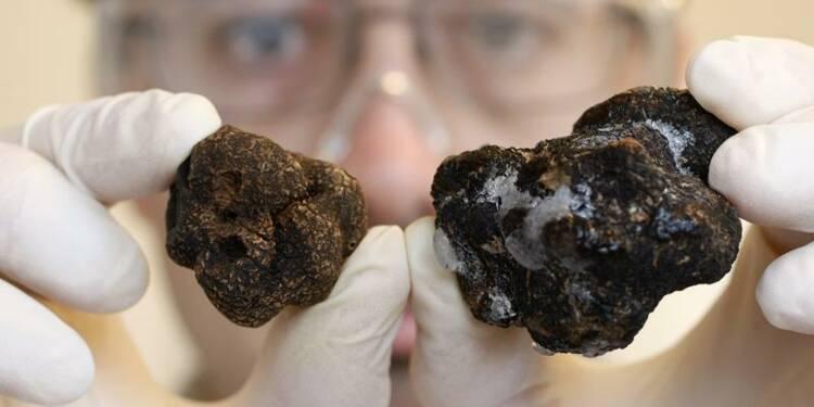 La truffe française convoque la science contre sa cousine chinoise