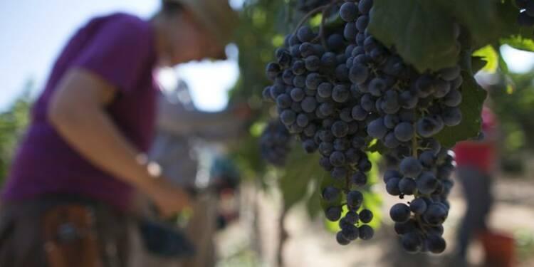 Récolte de vin revue à la baisse à cause des intempéries