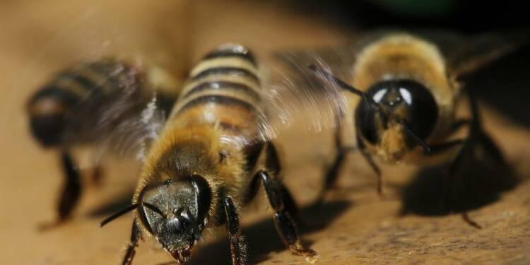 La Commission européenne suspend 3 pesticides nocifs aux abeilles