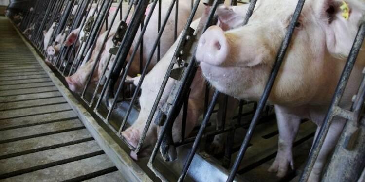 La France interdit les produits porcins américains
