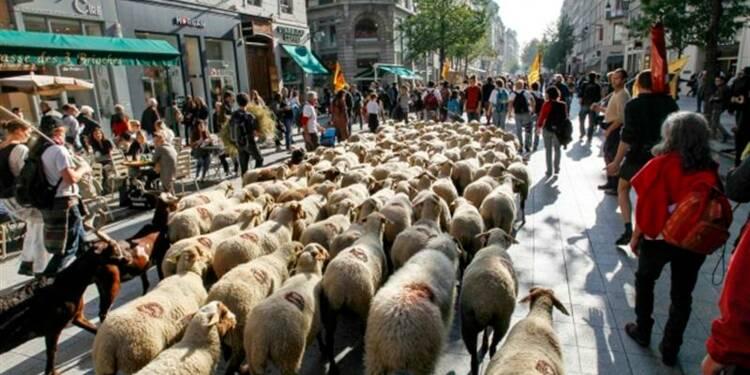 Une transhumance urbaine à Lyon contre le puçage du bétail
