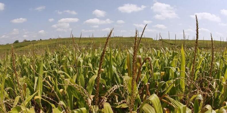 Monsanto bat le consensus au 2e trimestre