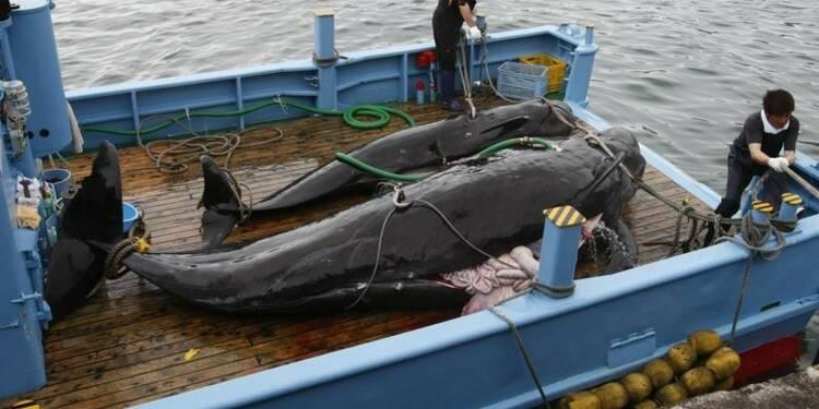 """Le Japon condamné à arrêter la pêche à la baleine """"scientifique"""""""