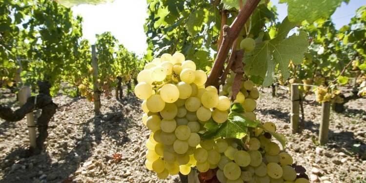 Risques de blanchiment d'argent dans les vignobles français