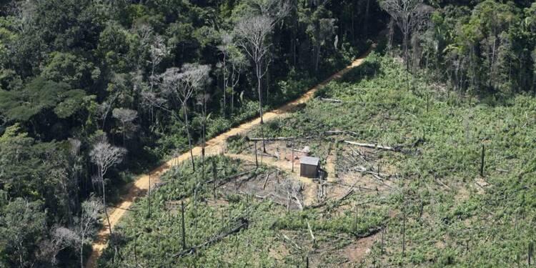 Le rythme de déforestation de l'Amazonie augmenterait de nouveau