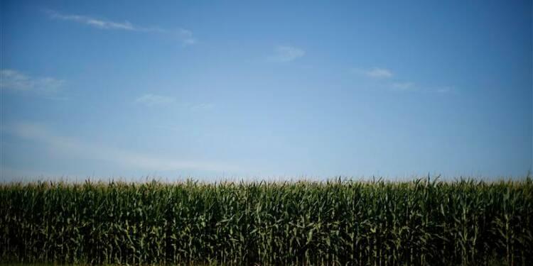 Les Verts proposent d'interdire tous les OGM en France