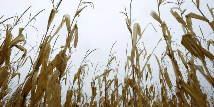 L'interdiction des OGM progresse en France et dans l'UE