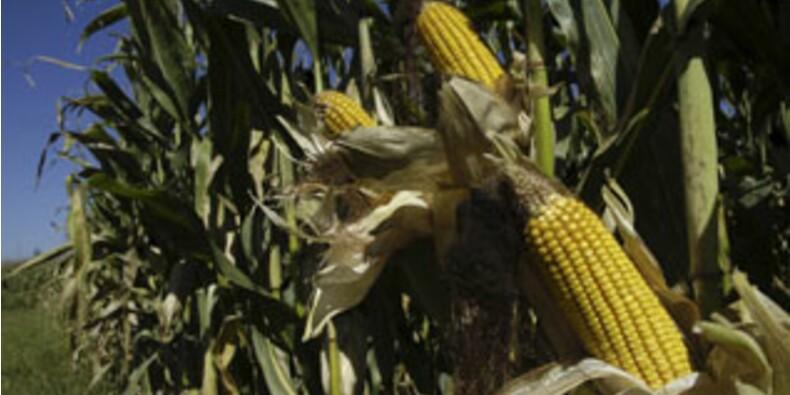 Avec ses OGM, Monsanto promet de nourrir toute la planète