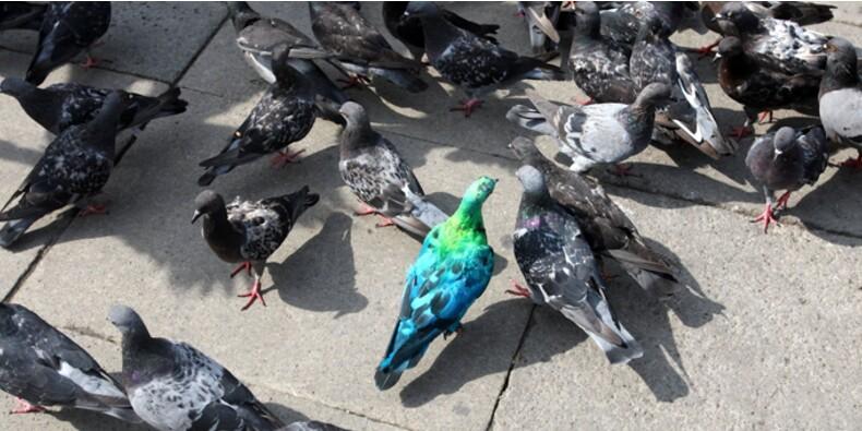 """Mouvement des """"pigeons"""" : pourquoi la CGPME entre en dissidence"""