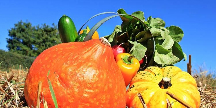 Les produits bio sont-ils vraiment meilleurs pour la santé ?
