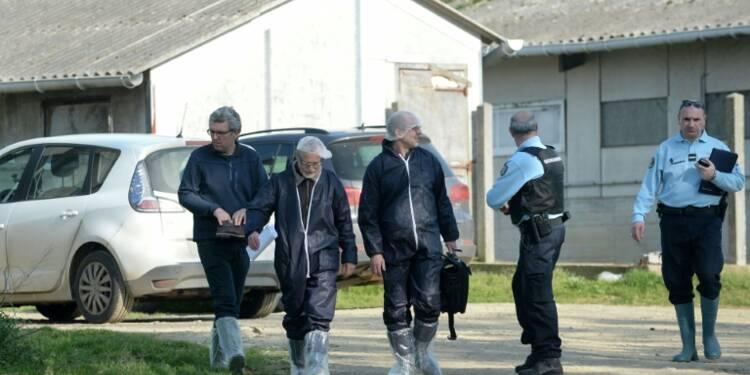 Maltraitance: retour à la normale dans l'élevage porcin épinglé