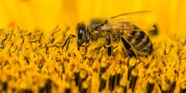 Néonicotinoïdes : quel est l'impact de ces pesticides sur les abeilles ?