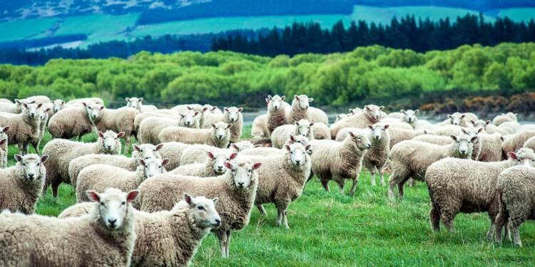 Les managers sont tous des moutons