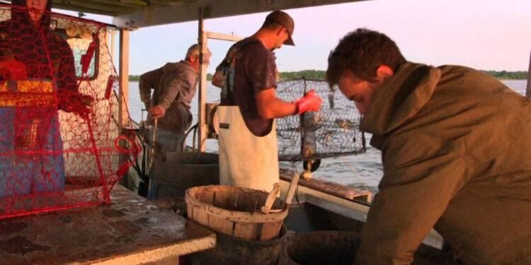 USA: les crabes bleus soutiennent l'économie du Maryland