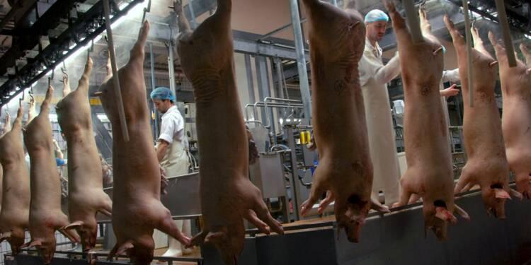 Chez le plus gros producteur de porc français, les éleveurs sont les patrons
