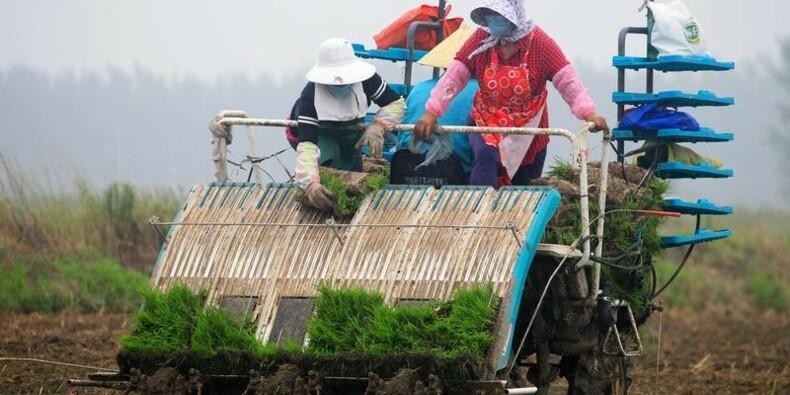 La Chine va importer pour la première fois du riz américain