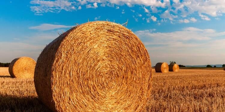 Sans subvention, la moitié de nos agriculteurs serait en perte