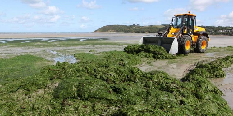 Algues vertes : le fléau de la Bretagne est de retour