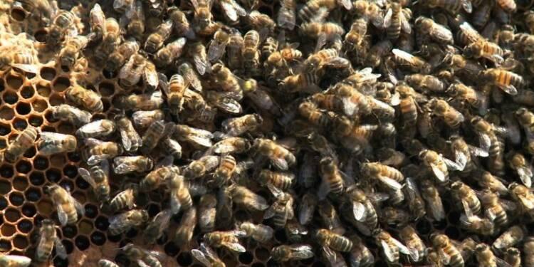 Dans la grande ruche parisienne, les abeilles font leur miel