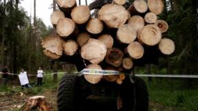 La CJUE ordonne la fin des abattages dans une forêt polonaise