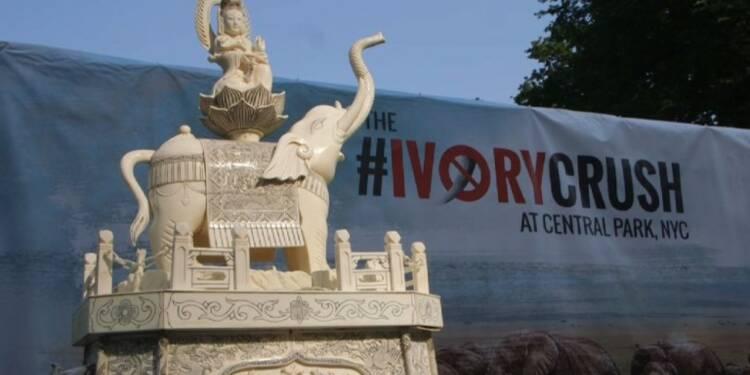 Près de deux tonnes d'ivoire détruites en public à New York