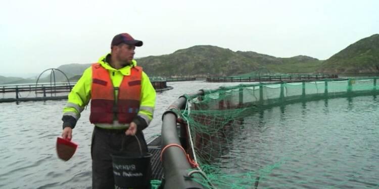 Russie: la mer de Barents, lieu idéal pour l'élevage du saumon