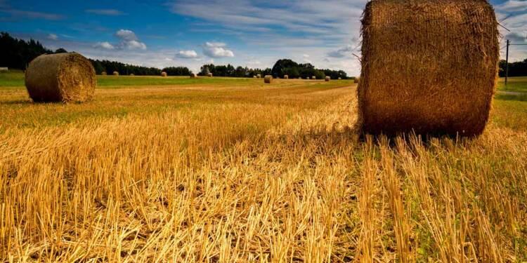 Investir dans les terres agricoles : de larges exonérations en matière d'ISF et de succession