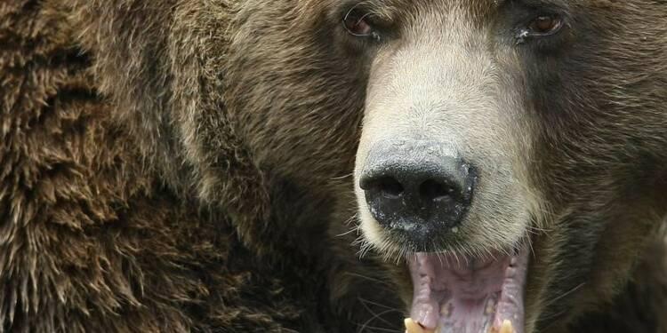 Enquête après une vidéo appelant à la chasse à l'ours en Ariège