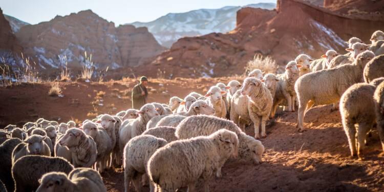 Être moutonnier en Bourse, ça peut rapporter gros !