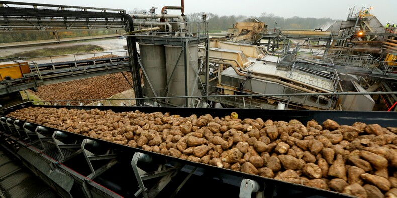 Après les quotas, les géants européens du sucre tirent la langue