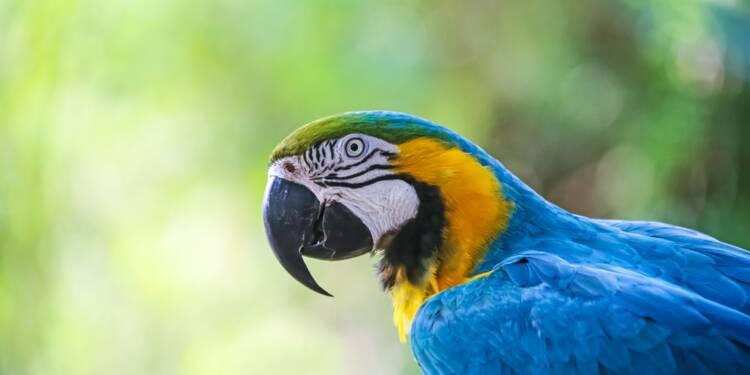 Un perroquet passe une commande sur Amazon en imitant la voix de sa maîtresse