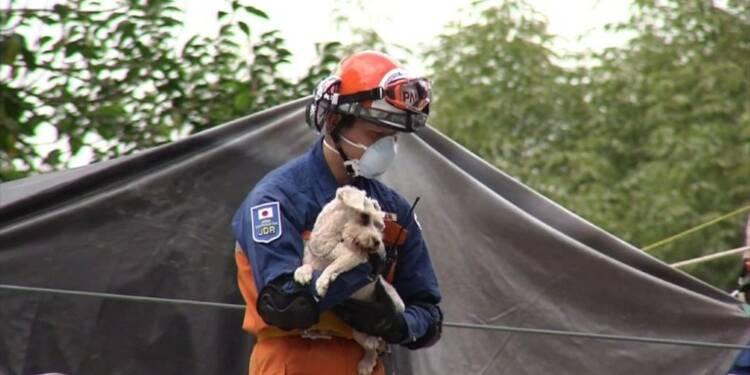 Séisme au Mexique: un chien sorti vivant des décombres