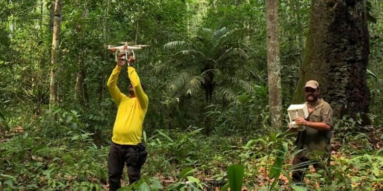 Des drones au service de la protection des forêts de l'Amazone