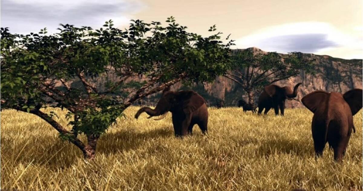 Le commerce de l 39 ivoire - Comment reconnaitre de l ivoire ...