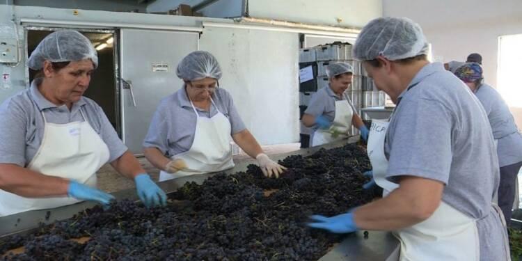 Malgré les obstacles, l'industrie du vin turc refuse de flancher