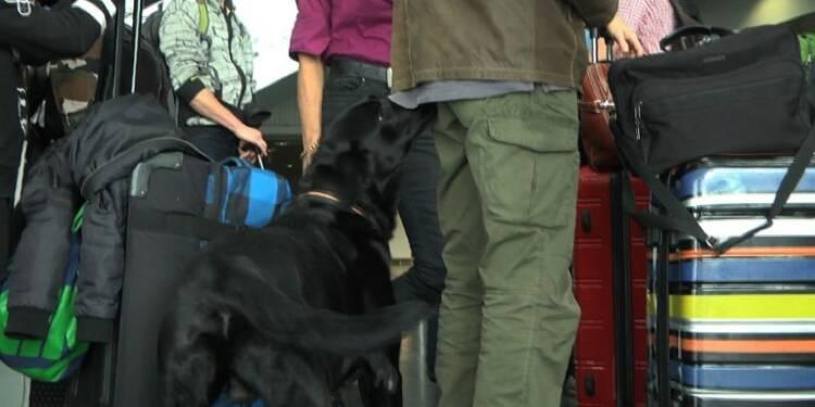 Des chiens pour détecter les billets de banque non déclarés