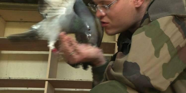 Au Mont Valérien, l'armée veille sur ses pigeons-voyageurs