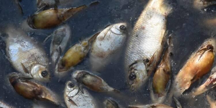 Paraguay:Des milliers de poissons trouvés morts dans une rivière
