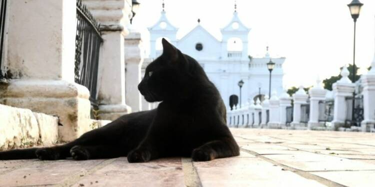 Pacte avec le diable? Des chats gardiens de tombes en Colombie