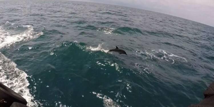 La saison meurtrière des dauphins de la mer Noire