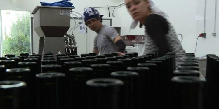 Le pari du saké made in France
