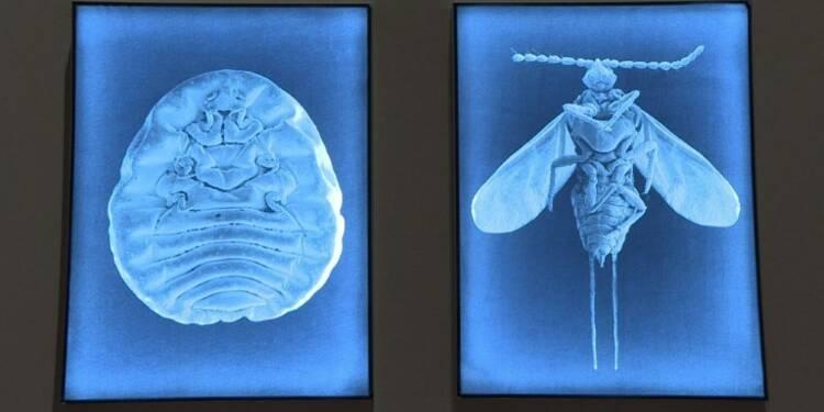 De parasite à œuvre d'art: Mexico honore un insecte