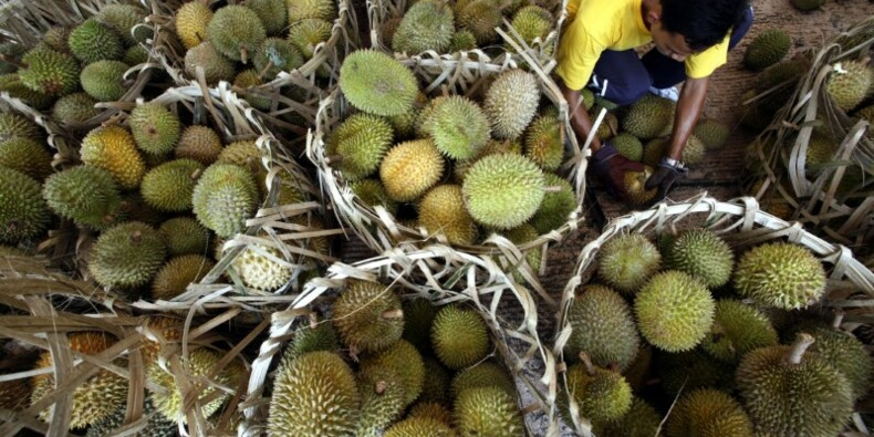 Le commerce des fruits tropicaux vers un nouveau record en 2017