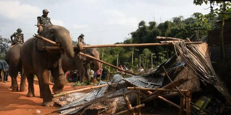 Inde: des éléphants utilisés comme engins de chantier