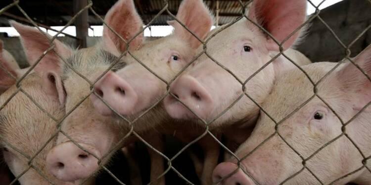 La Chine devrait ouvrir davantage son marché au porc français