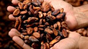 Coton, cacao… Il est temps de miser sur les matières premières agricoles, voici comment