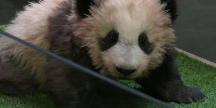 Le panda du zoo de Beauval baptisé par Brigitte Macron