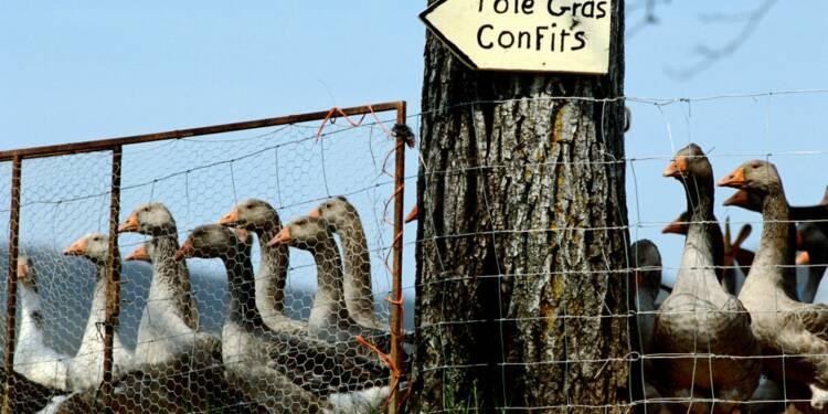 Faut-il interdire la production de foie gras ?