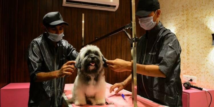 Inde: un hôtel de luxe pour chiens ouvre à Delhi