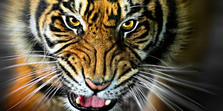 Faut-il interdire les animaux sauvages dans les cirques ?